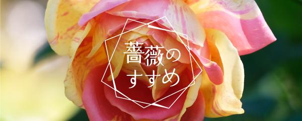 薔薇のすすめ